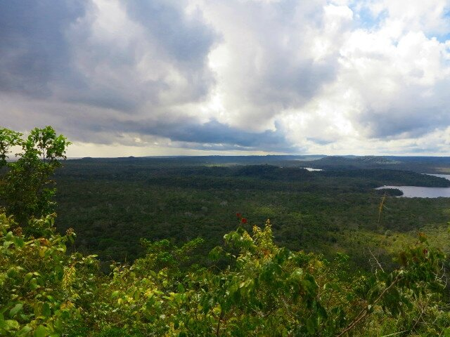 Verte Amazonie à Alter do Chao