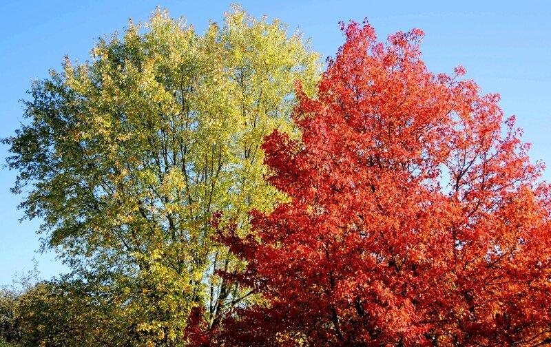 Port de l'Homme, arbres et automne (58)