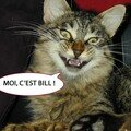 Bill, The cat !