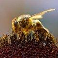 Macintosh HD:Desktop Folder:photos nature:PHOTOS INSECTES:chili_6_bg_081404