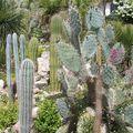 Jardin exotique à Bandol Mai 2008