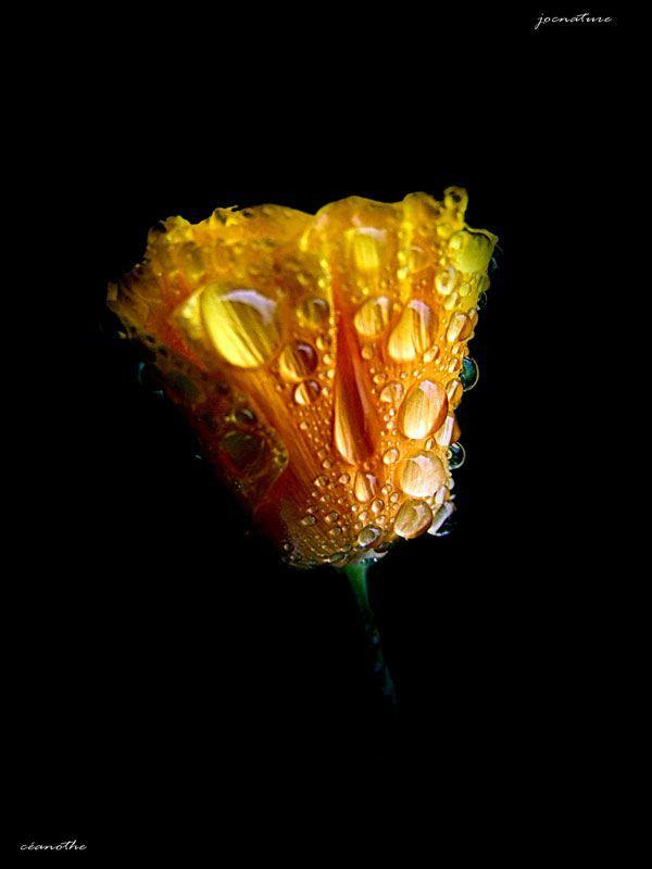 couleurs-de-fleurs21jpg