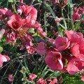 Fleurs suite 010