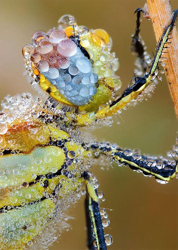 Bee_Zoom