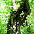 Forêt de Bertiz (Espagne)