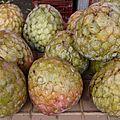 annona-reticulata-fruits-visoflora-6511