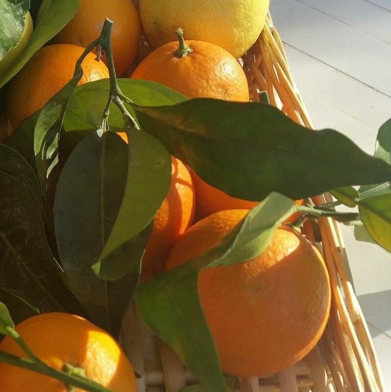 oranges douces menton