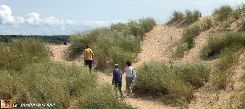 Aux environs des sables-d'Olonne