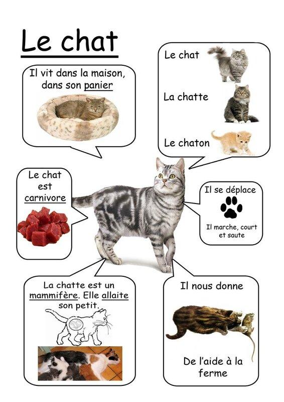 Livre des animaux (7)