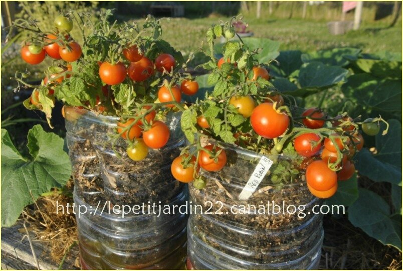 comment r cup rer les graines de tomates vid o le petit jardin des ecoliers jardiner l. Black Bedroom Furniture Sets. Home Design Ideas