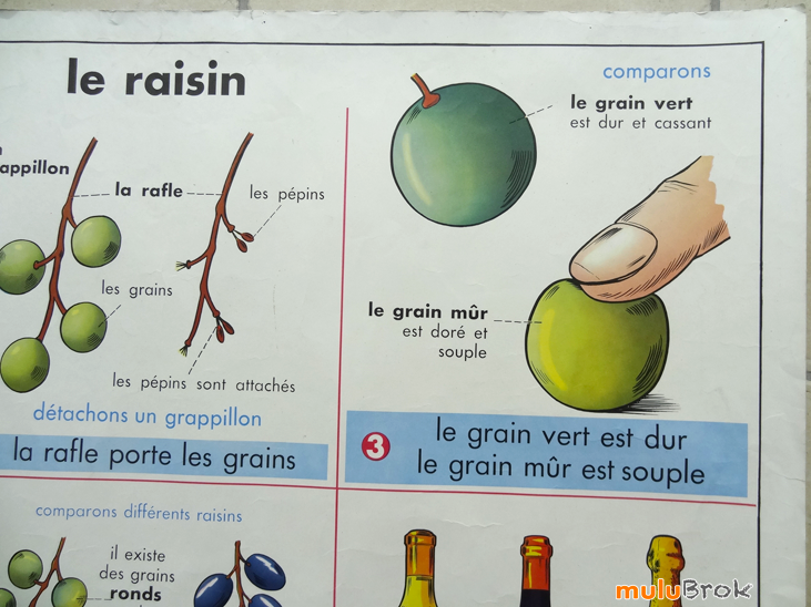 AFFICHE-Raisin-Chataigne-7-muluBrok