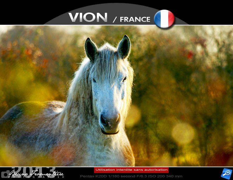 Horse 1000