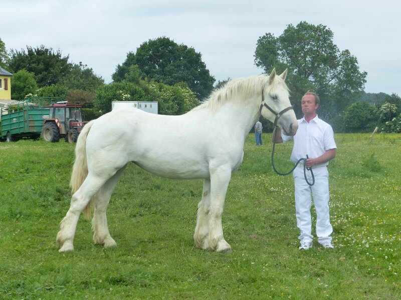 Duchesse de Camblain - 2e 2 ans - Local de Bernaville - 14 Juin 2015 - Photo SHB