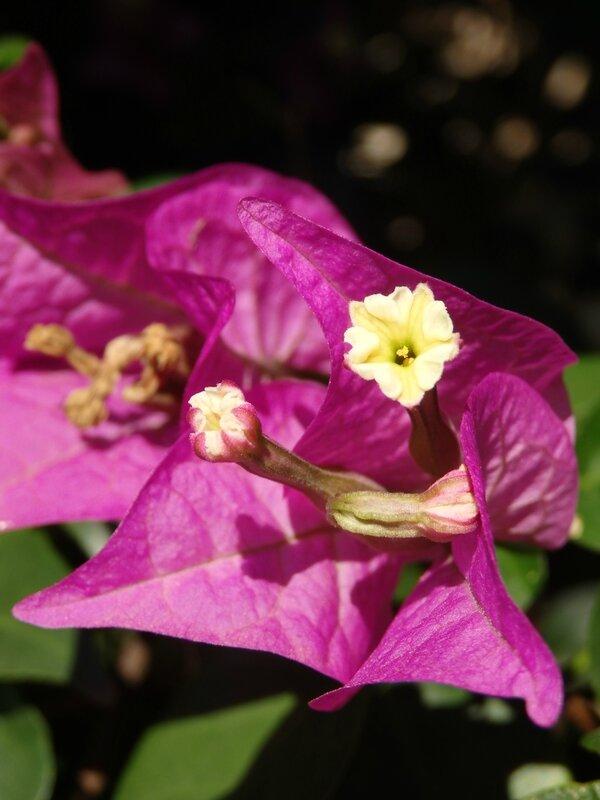 fleurs aimant le soleil