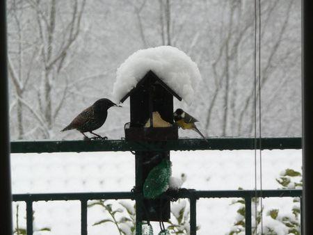 maison_oiseaux