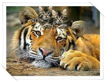 tigre et chatons