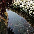 Un pont et des fleurs