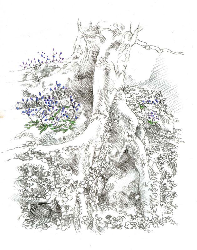 arbre à susisses