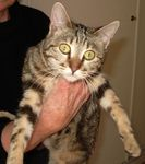 Adoption_Marianne_chatte_avril_2009