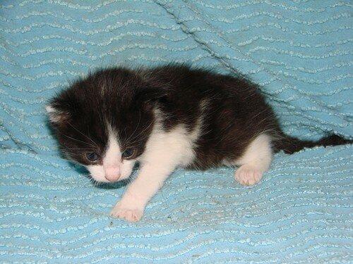 2008 04 11 Un petit chaton de Blanco noir et blanc
