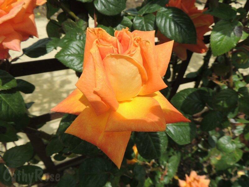 && Terre de Roses (7)