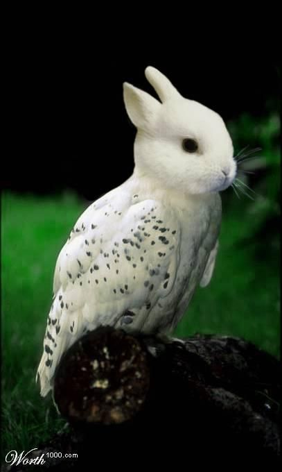 Bird_rabbit_1_
