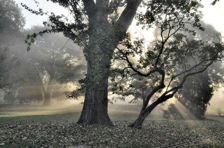 lumiere-automne
