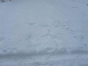 les traces dans la neige sans nous !!!!