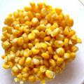 Maïs doux au jardin, interrogations en cuisine