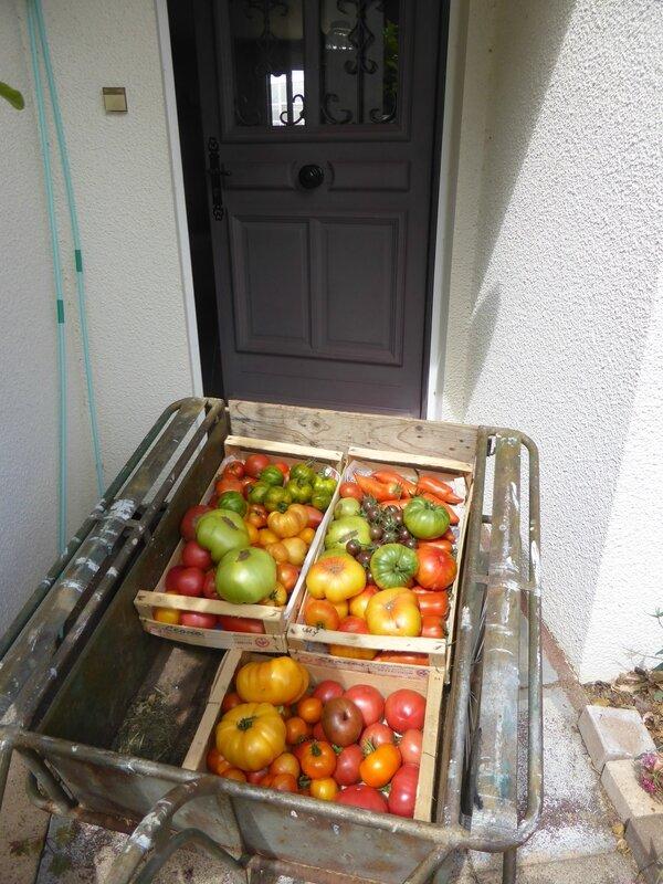 15-tomates (2)