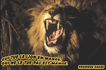 proverbearabe_lion