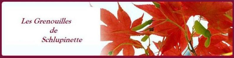 Red_Leaves_1_