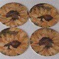 Tournesols - Sunflower coasters