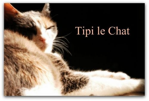 Tipi_le_Chat
