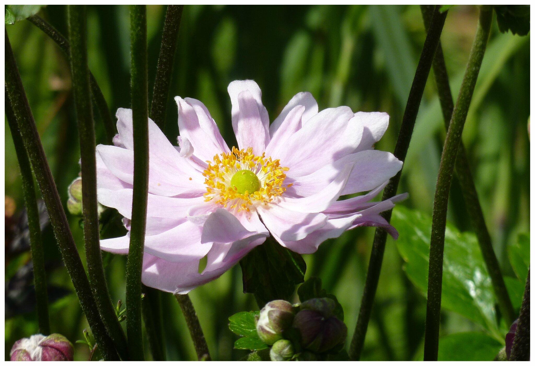 En ce moment le jardin par passion for Passion amistad