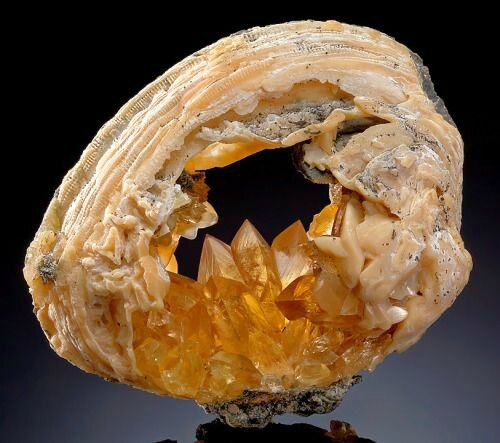 Golden Calcite in a fossilized clam shell from Florida