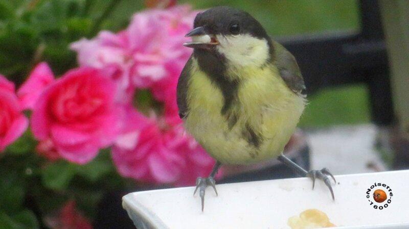 Oiseaux_2959