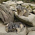 05 Les Marmottes (13)