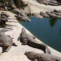 Parc Djerba Explore : l'île aux crocodiles