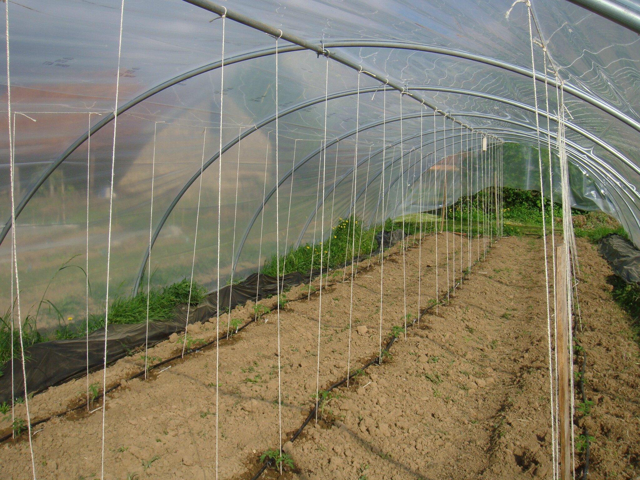 Je cultive donc je pense b n dicte la campagne - Comment faire grossir les tomates ...