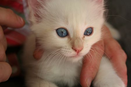 Chatons_26_avril_2008_733