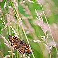 Petites fées (papillons)