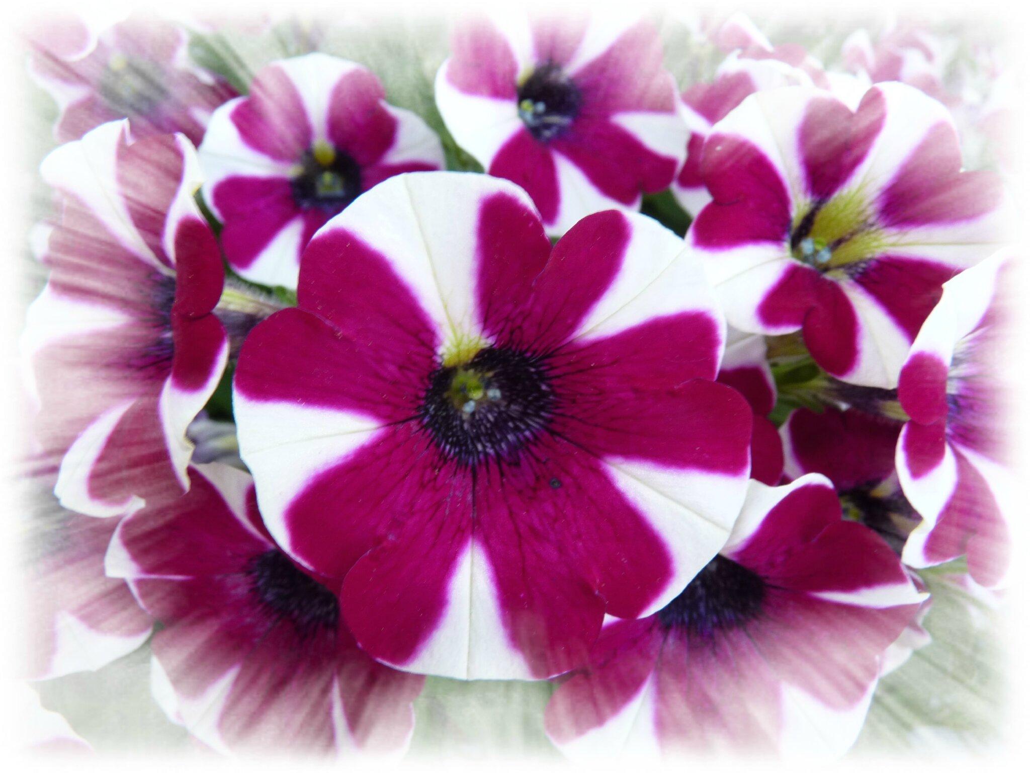 Flowers, flowers :-)