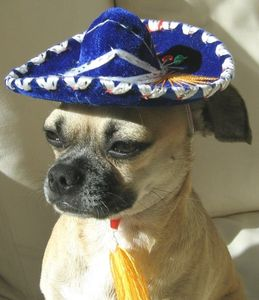 mexican_sombrero_scout_dog_model