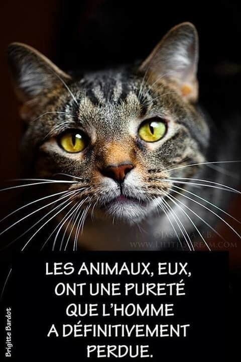 Citation de BB les animaux...