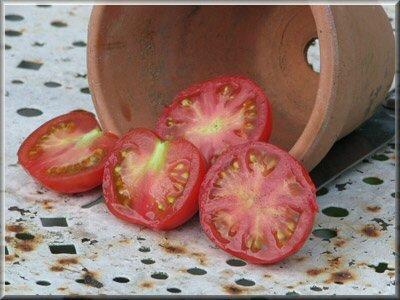 18 - tomate stupice - www.passionpotager.canalblog.com