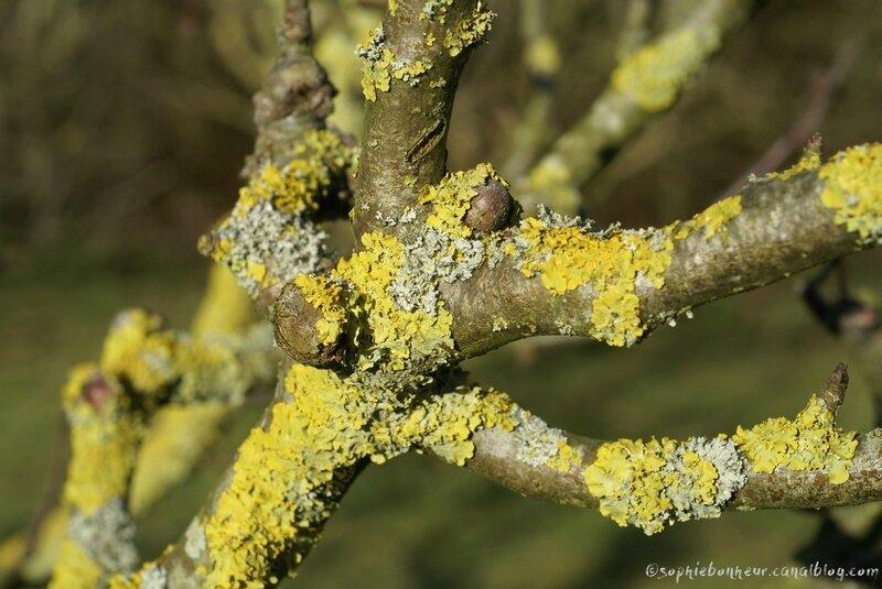 février jardin lichen