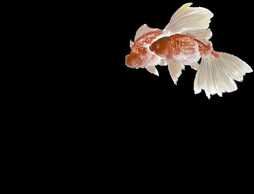 tube poissons 23