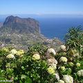 Derrière les Hortensias, le Rocher-de-Porto-da-Cruz