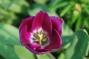 Fleur au jardin mars 2012 007